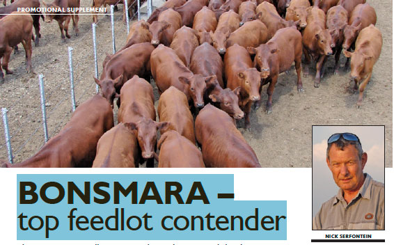 BONSMARA – TOP FEEDLOT CONTENDER